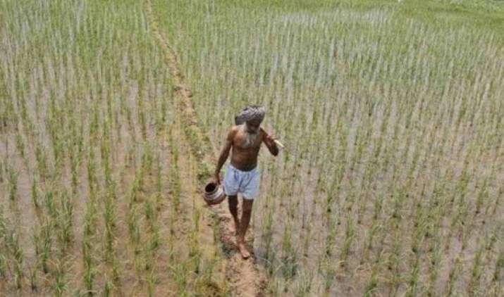 छोटे किसानों को मुफ्त बीज और कीटनाशक उपलब्ध कराने पर विचार कर रही है महाराष्ट्र सरकार- India TV Paisa