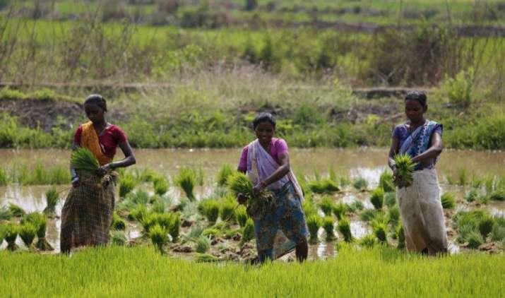 2017-18 के लिए धान की MSP 80 रुपए बढ़ाने की तैयारी में सरकार, किसानों को मिलेगा 1550 रुपए का भाव- IndiaTV Paisa