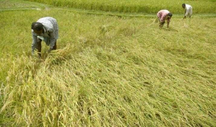 फसलों के न्यूनतम समर्थन मूल्य (एमएसपी) में वृद्धि बीते साल से अधिक, पर अभी भी काफी कम: नोमूरा- India TV Paisa