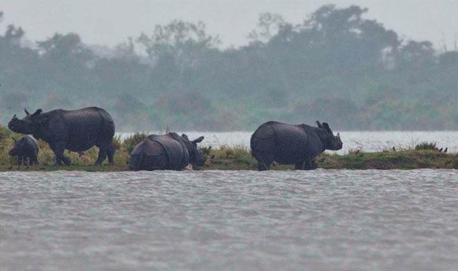 Assam Floods- India TV