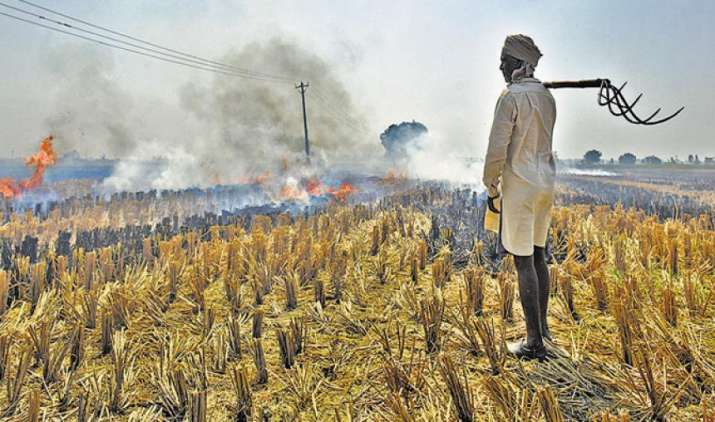 प्रदूषण ने खोल दिया किसानों के लिए कमाई का रास्ता, NTPC धान की 'आधी' कीमत पर खरीदेगी पराली- India TV Paisa