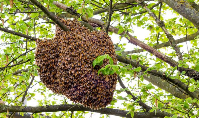 honey bee- Khabar IndiaTV