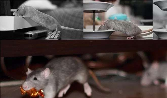 rat- Khabar IndiaTV
