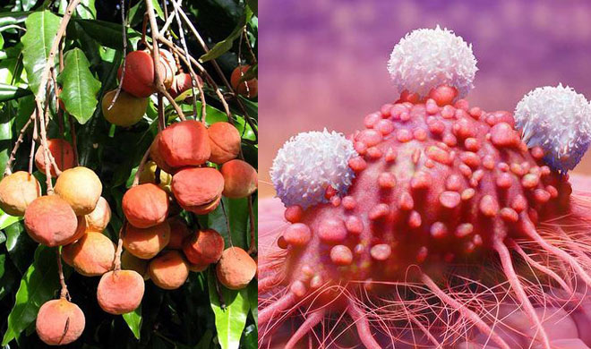 Cancer treatment using rainforest berries destroys tumour in