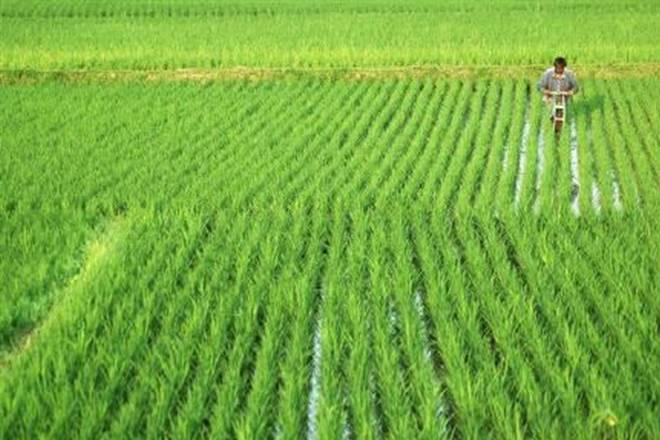 rabi crop- India TV Paisa