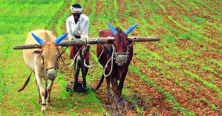 Farm Income- India TV Paisa