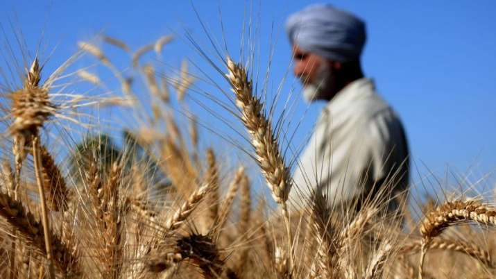 Wheat production - India TV Paisa
