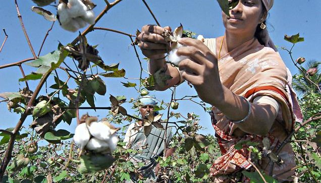 cotton production estimate for 2017-18- IndiaTV Paisa
