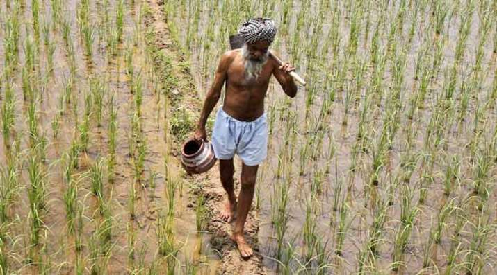 Agriculture Ministry To Soon Move Cabinet Note To Ensure Farmers Get MSP- India TV Paisa