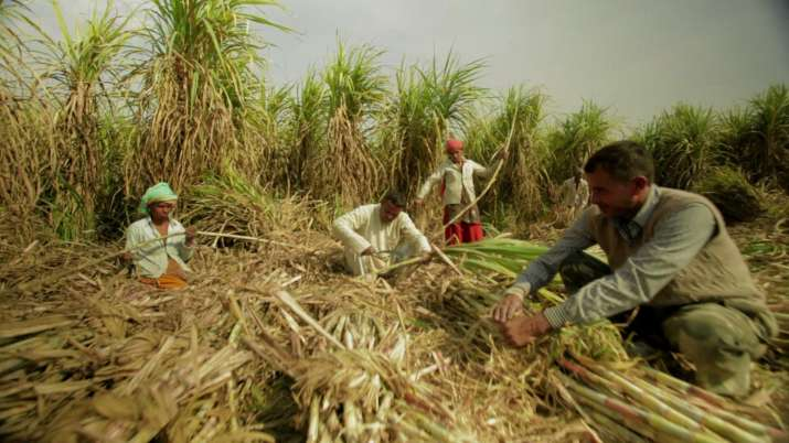 Sugarcane Farmers- India TV Paisa