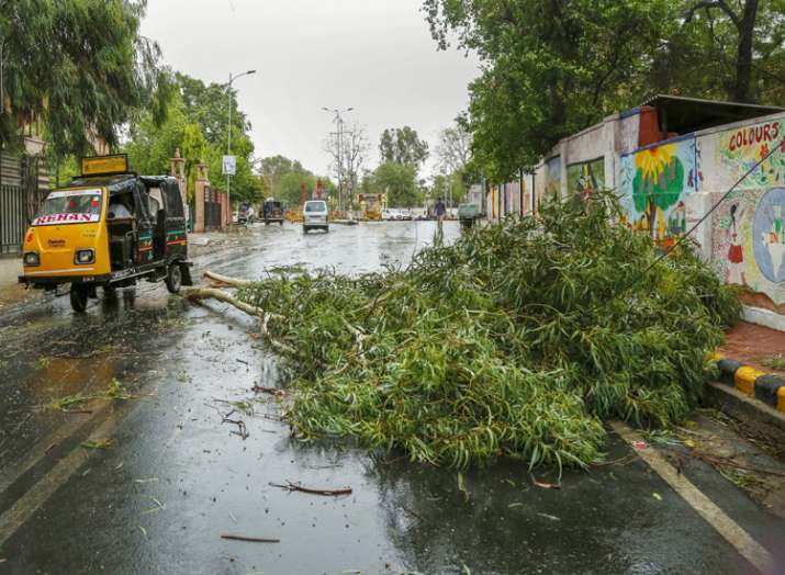 Commuters ride past a fallen tree after a thunderstorm...- India TV