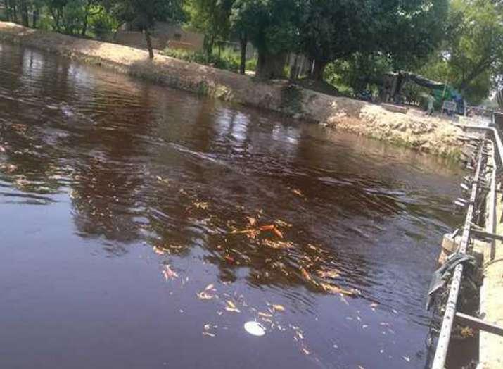 Dead fish in Indira Gandhi canal- India TV