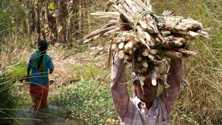 Cabinet approves Rs 55 per ton subsidy to sugarcane farmers- India TV Paisa