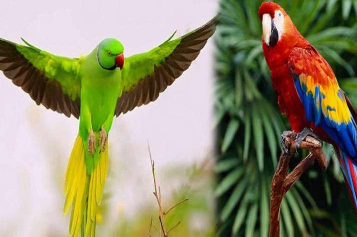 parrot- India TV