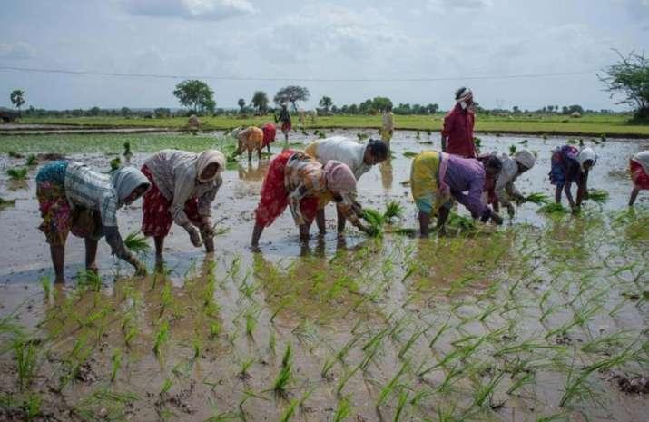 Kharif sowing picks momentum, sugarcane area surpasses 5 million hectare- India TV Paisa