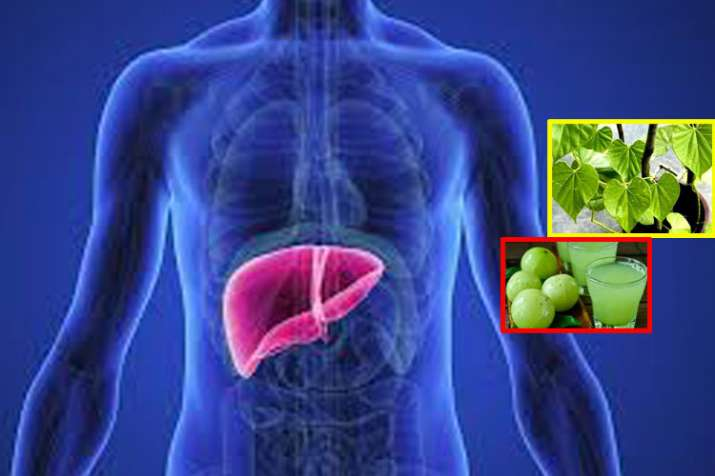these home remedies will keep your liver healthy in hindi- India TV