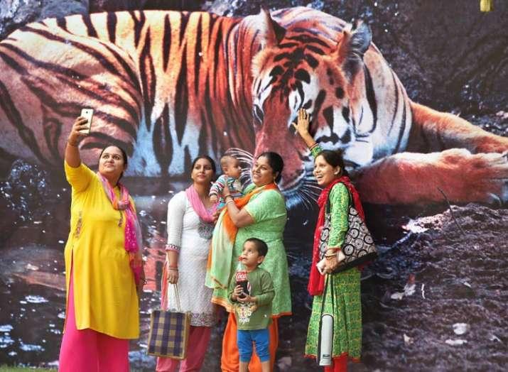 मध्यप्रदेश, टाइगर स्टेट, टाइगर- India TV