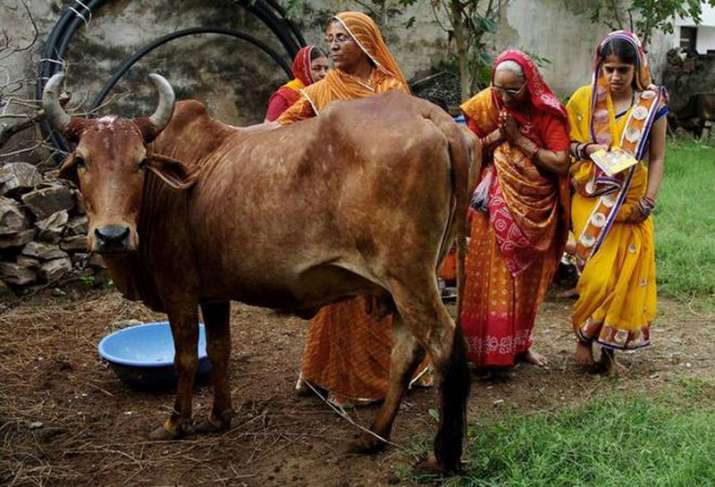 Cow urine is getting more price over Cow Milk in Rajasthan- India TV Paisa