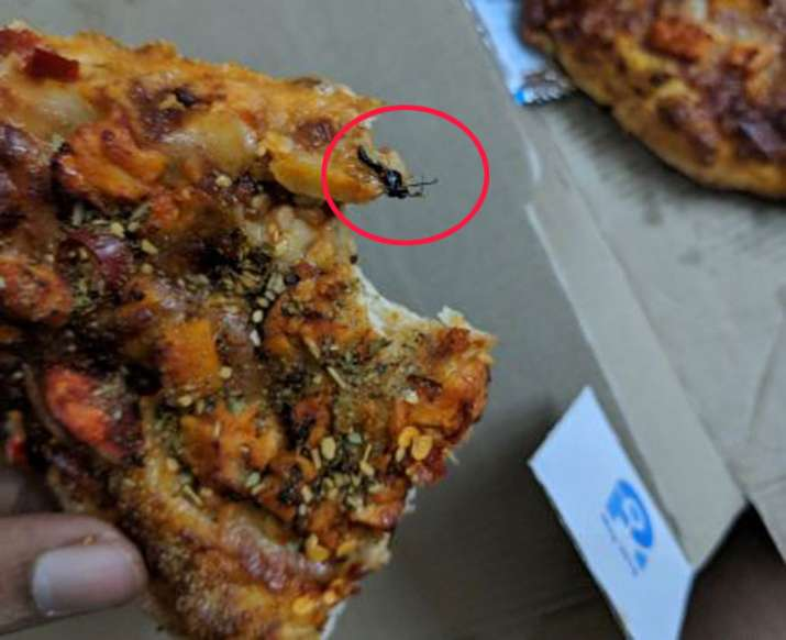 Noida resident accuses that insect found in Dominos Pizza delivered to him- India TV Paisa
