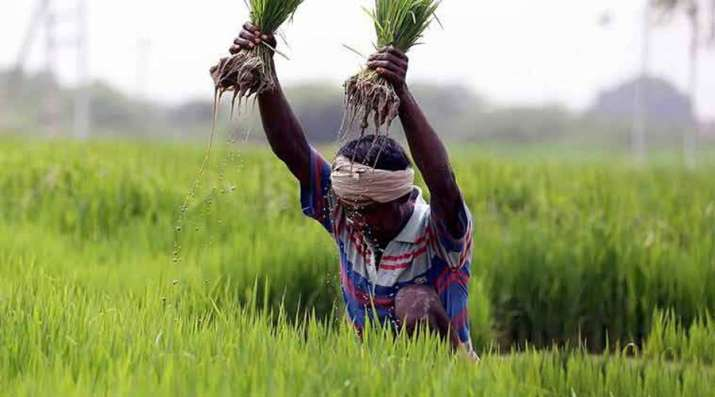 Government hikes MSP for Kharif crops for 2018-19 marketing season- India TV Paisa