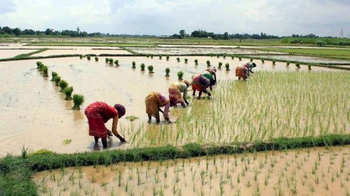 Kharif sowing lagging behind by 55 lakh hectare over last year- India TV Paisa