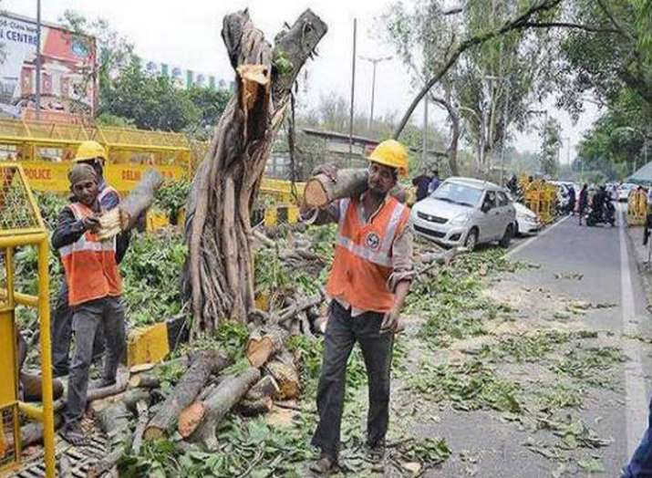 NGT stays tree felling for redevelopment project in...- India TV