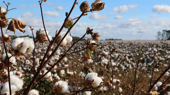 Global cotton consumption estimated to rise 4 percent in 2018-19 says ICAC- India TV Paisa