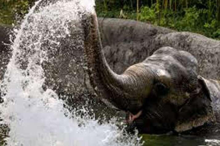Elephant - India TV