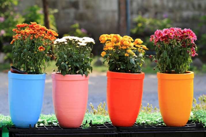 Vastu Tips about flower pot- India TV