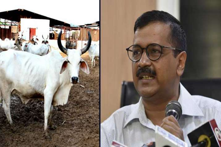 arvind kejriwal controversial statement on cow- India TV