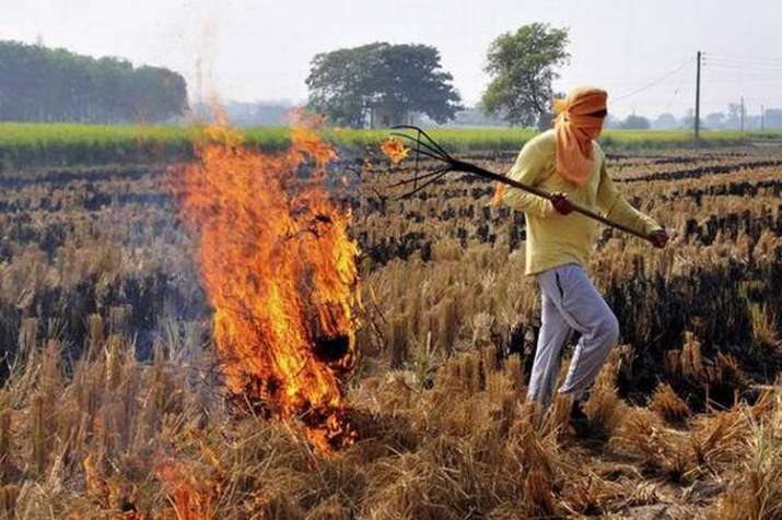 Stubble burning from Punjab, Haryana contributed to pollution in Delhi: SAFAR | PTI File- India TV