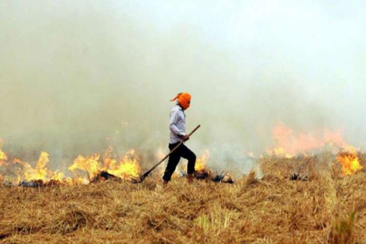 Take urgent measures to assist farmers to prevent crop residue burning : NGT to states- India TV