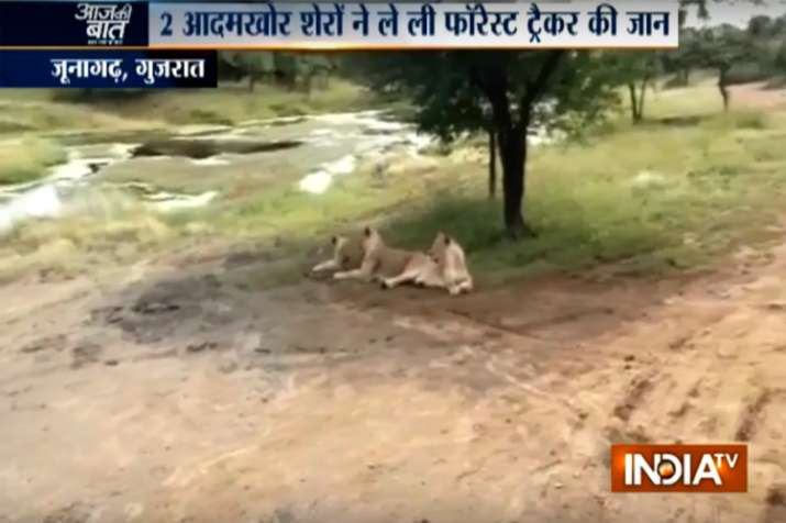 Gir forest lion attack- India TV