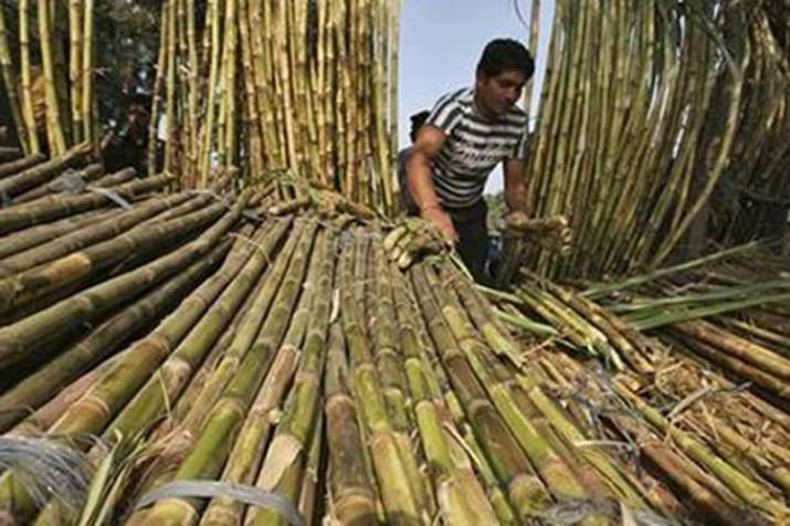 Sugarcane farmer- India TV