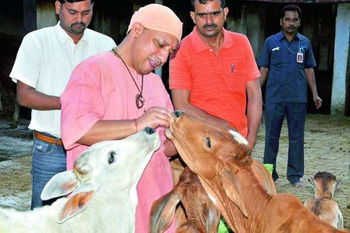 UP CM Yogi Adityanath | PTI File Photo- India TV