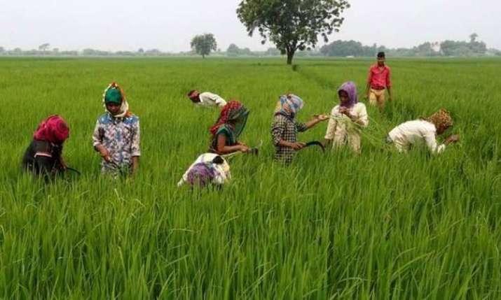 Harvesting in jhabua- India TV Paisa