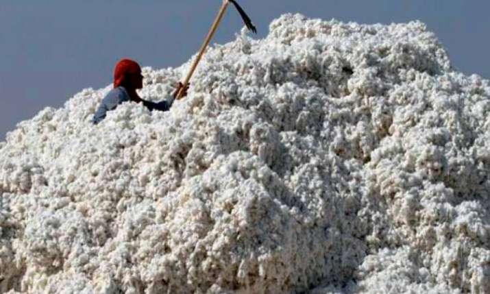 cotton crop output- India TV Paisa