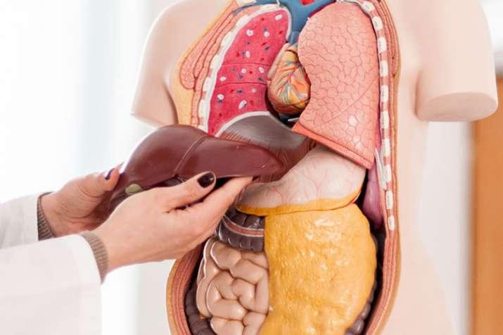 Liver fatty liver diseas symptoms causes and treatment :फैटी