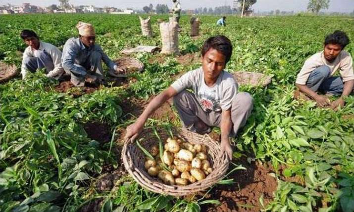 PepsiCo is suing farmers in India for growing the potatoes it uses in Lays chips- India TV Paisa