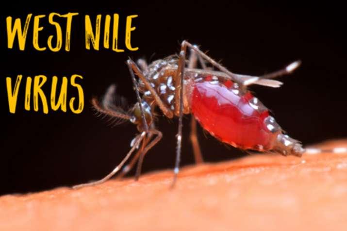 West nile fever- India TV