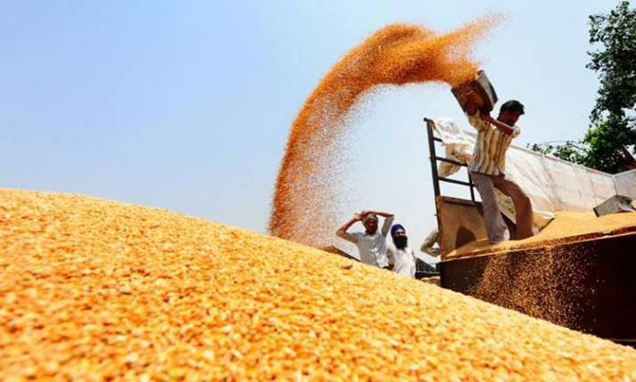Record production of wheat in Punjab- India TV Paisa
