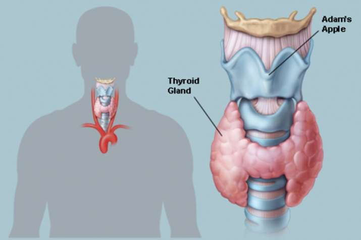 world thyroid day- India TV