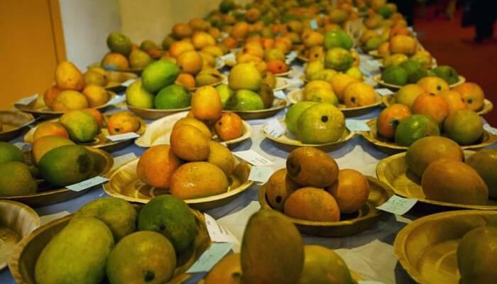 Mango festival- India TV