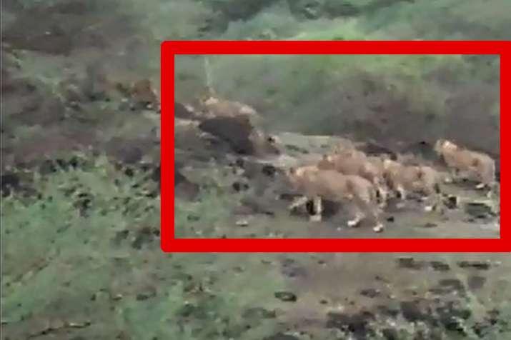 Lions- India TV