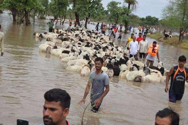 sheep- India TV