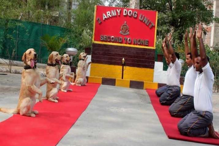 Rahul Gandhi tweets Army dog squad pic with 'New India'...- India TV