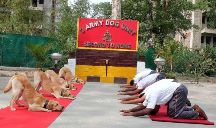 Yoga Day- India TV