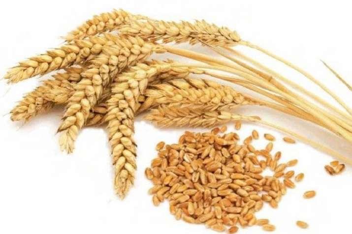 wheat procurement - India TV Paisa