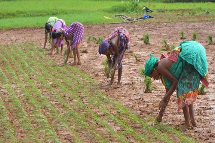 NIRDPR works on New technology in aquaculture to double farmers income - India TV Paisa