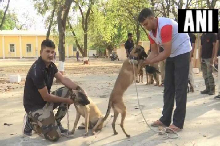 Police dogs- India TV